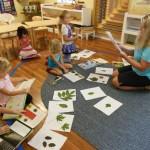 Exciting Leaf Study Presentation!